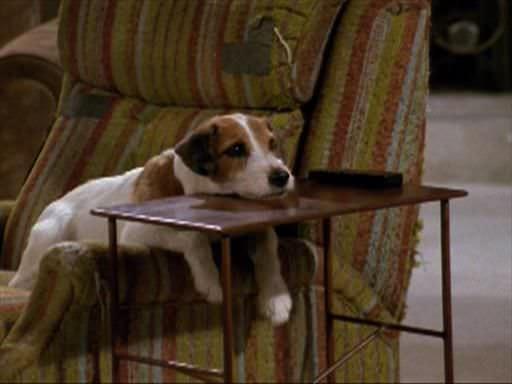 Eddie viendo tv
